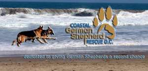 Coastal German Shepherd Rescue OC