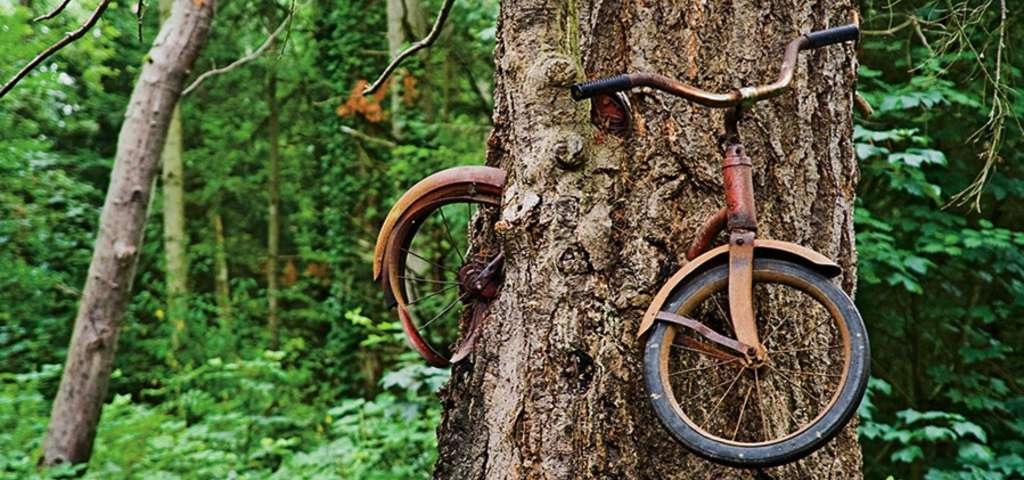 Vashon Island Bike In Tree Directions Bicycling And The Best