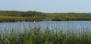 Coskata-Coatue Wildlife Refuge