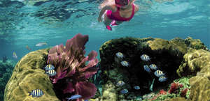 Family Snorkel Tours by Sundiver