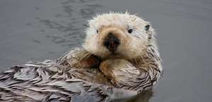 California Sea Otter Game Refuge