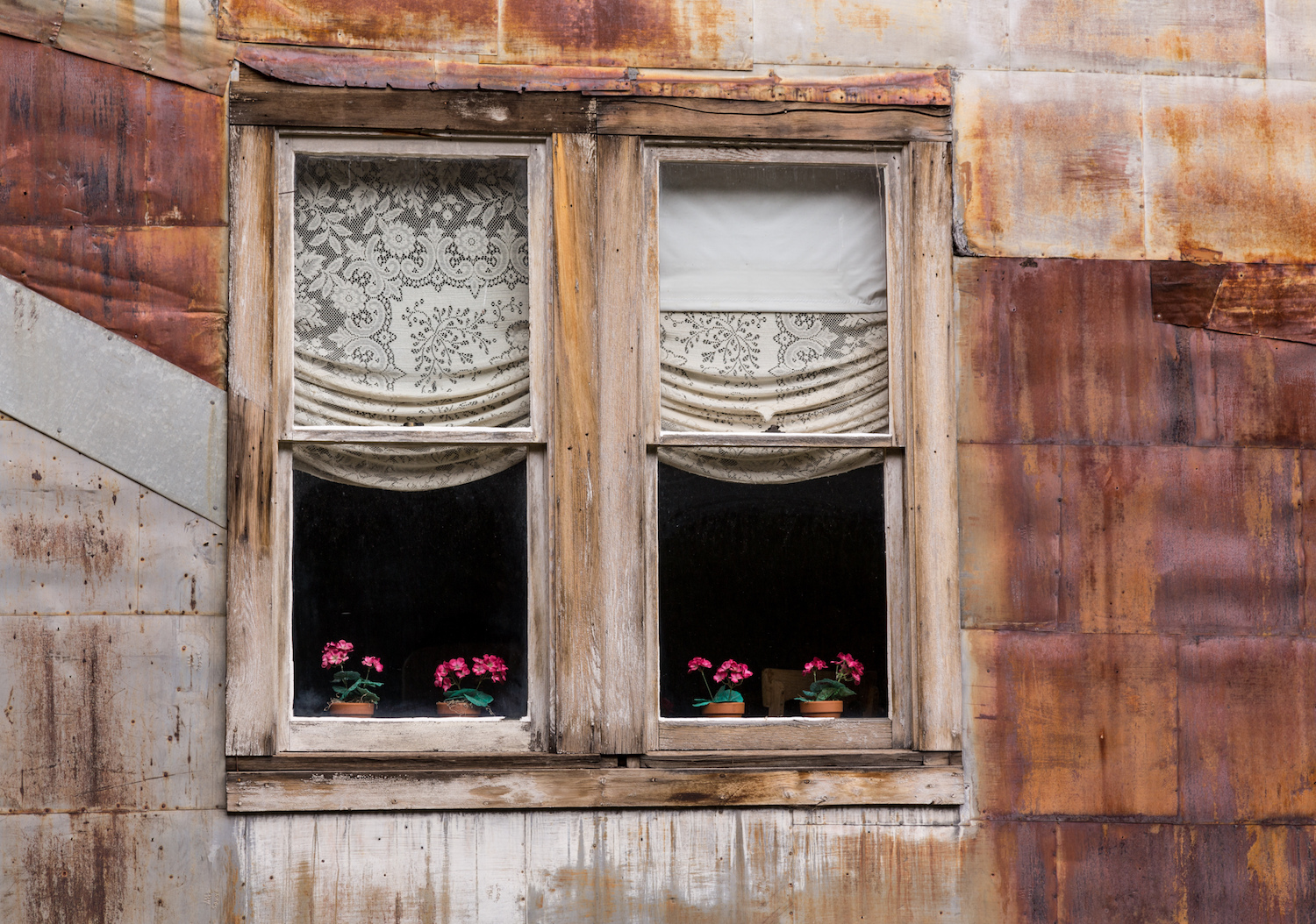 Old wooden windows and flowers in ghost town of St Elmo in Colorado.