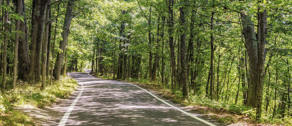 & The Tunnel of Trees M-119: Michiganu0027s most scenic road   Roadtrippers