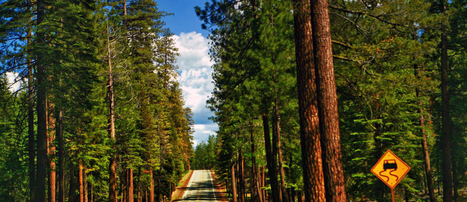 Here's why you'll fall in love with Sequoia National Park