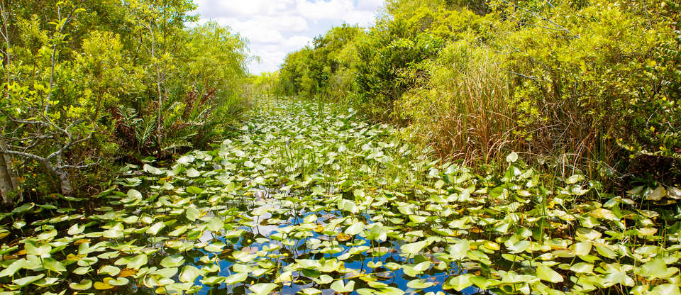 Feel the call of the wild exploring the Everglades