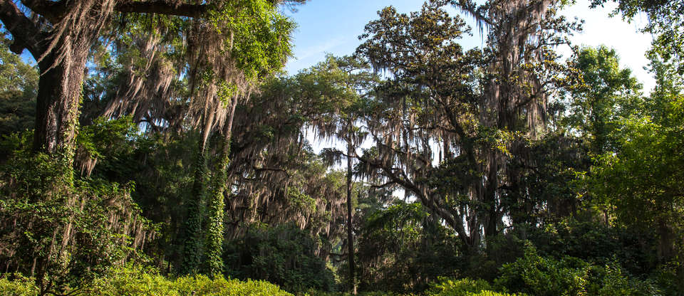 Discover Tallahassee's Unparalleled Natural Beauty