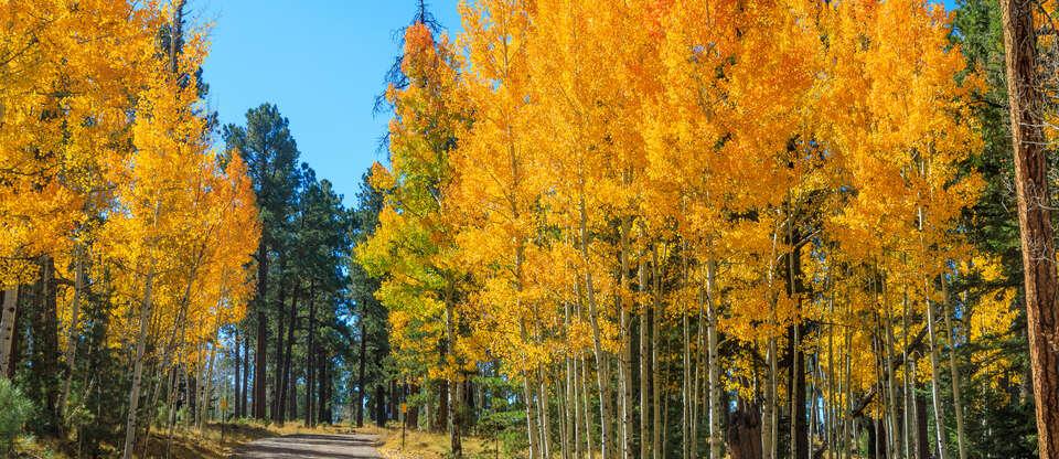 Bet you didn't know Arizona had so much greenery